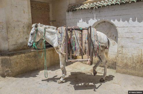 27_I-colori-del-Marocco_Copyright_Valerio-Bellone